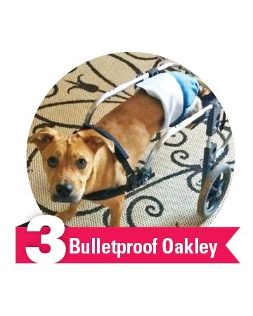 #3 Bulletproof Oakley