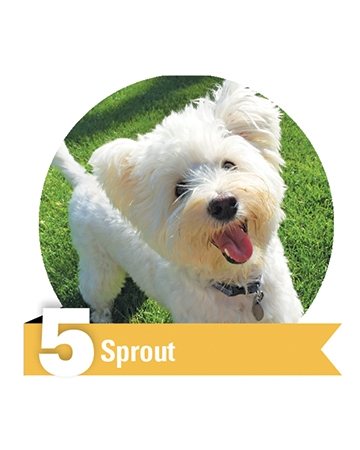 #5 Sprout