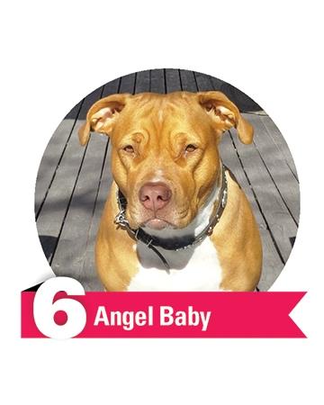#6 Angel Baby