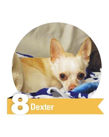 #8 Dexter