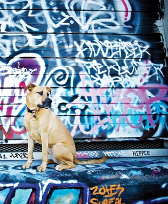 Graffiti Dogs