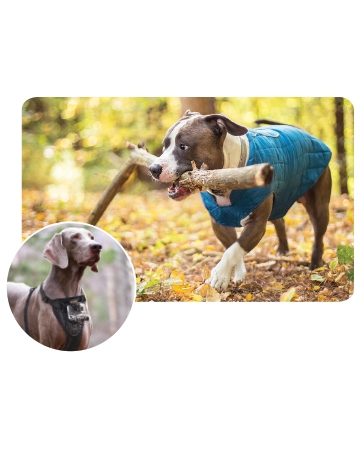 Loft Dog Jacket & Tru Fit Smart Harness from Adventure Beasts
