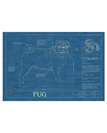 Animal Blueprint