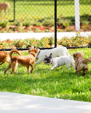 Crowded Dog Parks