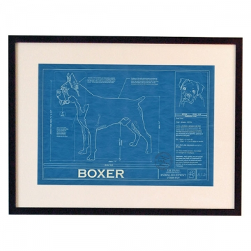 Animal Blueprint dog breed drawing