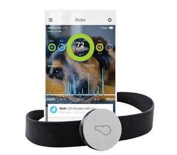 Whistle Activity Monitor Tracker