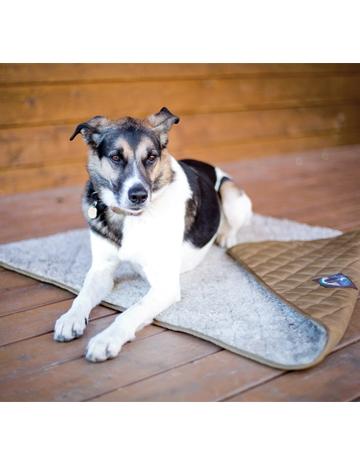 Skookum Dog