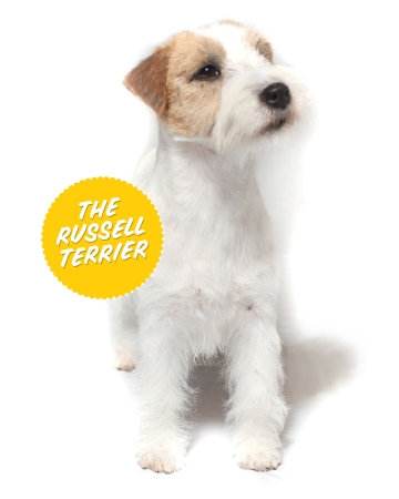 The Russel Terrier (Terrier Group)