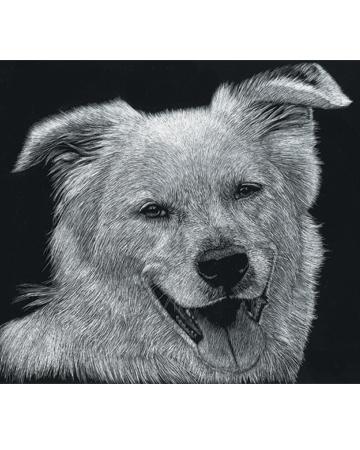 Scratchboard Pet Portrait from Natalie Zimmerman