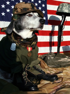 Army Pooch