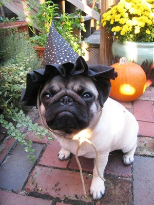 Pugwitch