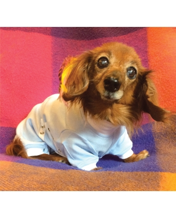 Post-surgical pet garment by Tulane's Closet