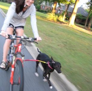 Bike-Leash.jpg