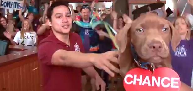 ABBA SPCA
