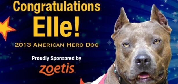 Elle: American Hero Dog