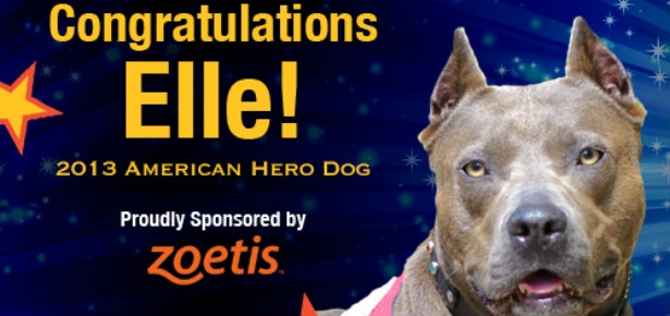 Elle: American Hero Dog