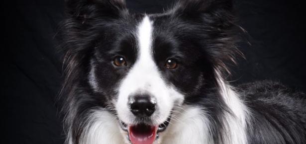 Amos 2020 Trick Dog