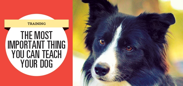 The Most Important Thing You Can Teach Your Dog