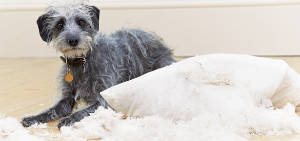 What to do when you dog gets a little naughtyHow to Stop your Dog's Attention-seeking Behaviours