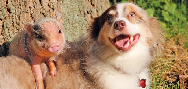 Dogs Lookin' Cute With Their Best Buds