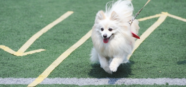How To Bring Out The Best In Your Dog Modern Dog Magazine
