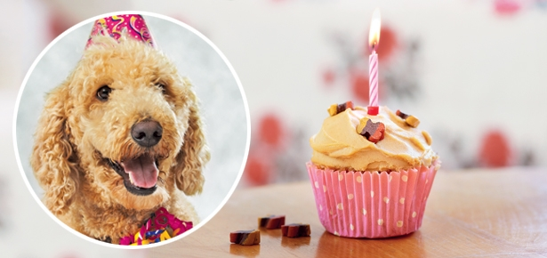 Fabulous Make A Birthday Cake For Your Dog Modern Dog Magazine Funny Birthday Cards Online Elaedamsfinfo