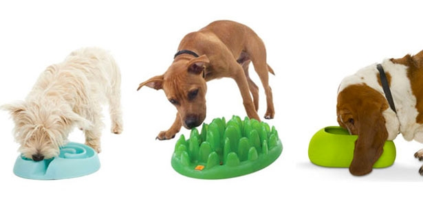 The Best Dog Bowls For Fast Eaters, Messy Eaters, and More ... - photo#6