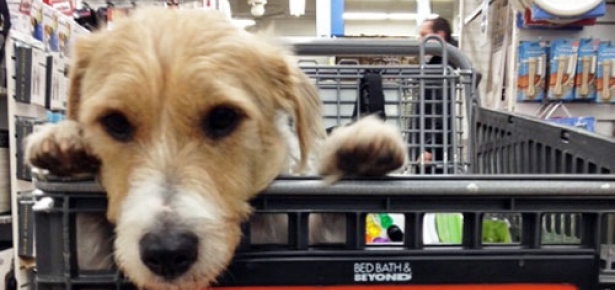 Nyc Bed Bath And Beyond Stores Welcome Four Legged Shopping