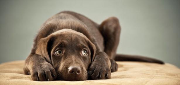 CanineConfidence.jpg