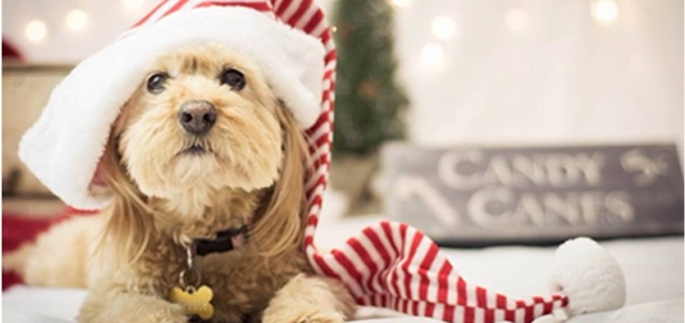 4 Ways to Help Animals this Holiday Season