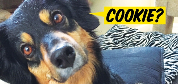 9 Dogs Who Want Their Cookie