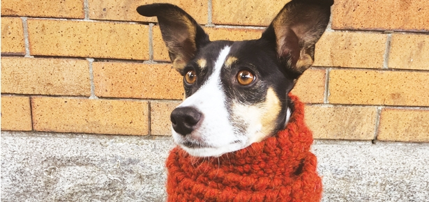 D.I.Y. Craft: Make Your Dog a Scarf!