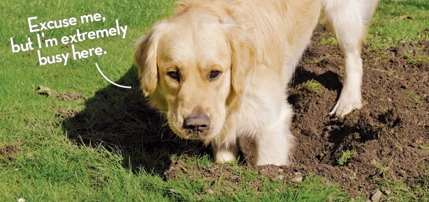 how to stop your dog from digging modern dog magazine