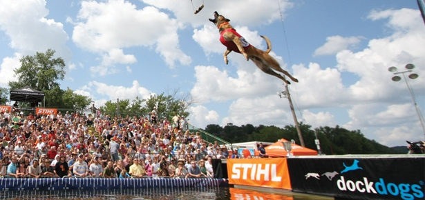SPLASH! High Jumpin' Dock Dogs