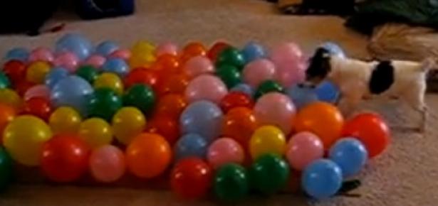 DogBalloon.jpg