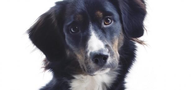 DogBodyLanguage-hd.jpg