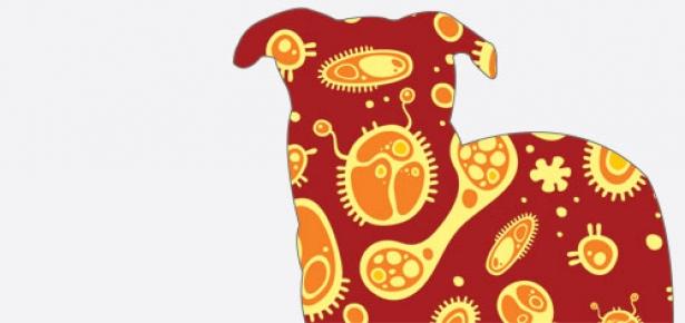 Dogbacteria-hd.jpg