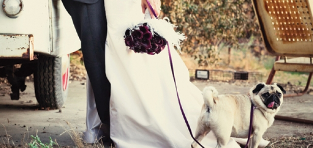 DogsInWeddings.jpg