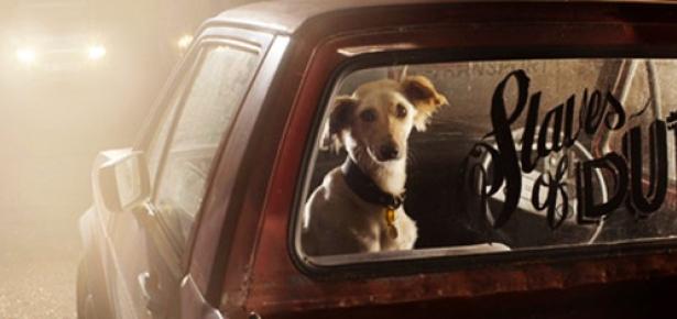 DogsinCars_hd.jpg