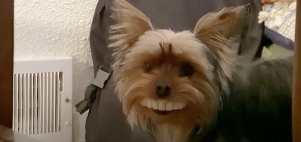 Dog Steals False Teeth
