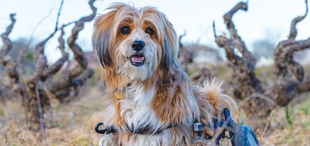 Special Pups