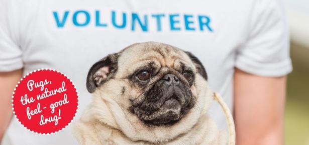 5 Fun Volunteer Ideas