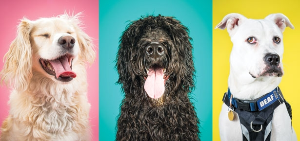 The Making of Viral Pet Photos