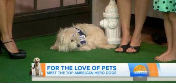 Meet the Hero Dogs!