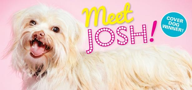 Meet Josh, Cover Dog Winner!