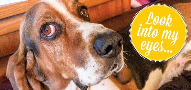 Is Your Dog Manipulating You?