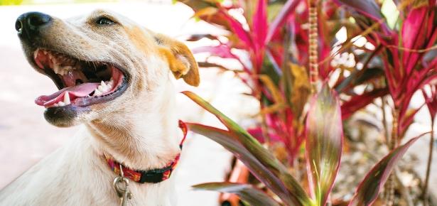 Dog-friendly travel: Mexico