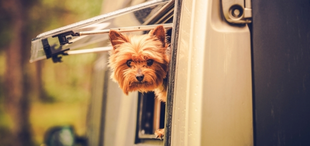 dog friendly rv camping