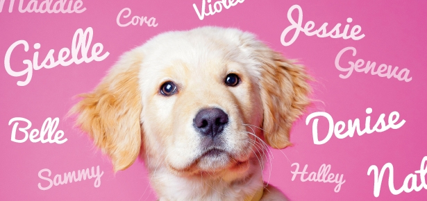 The Science of Choosing a Dog's Name