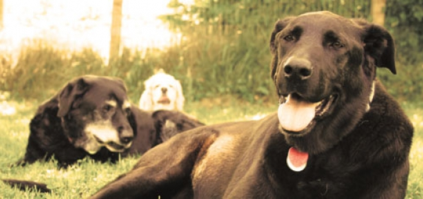 Old-Dog-Haven-header.jpg